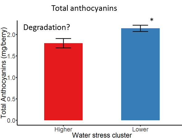 Figure 6. Total anthocyanin content of the berry was affected by the water stress clustering at the research site.