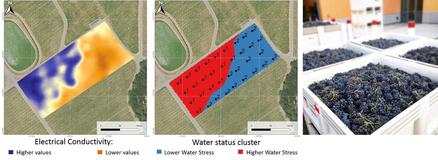 Figure 2. (left) map of the electrical conductivity in this vineyard, (center) Final management zones (summary of stem water potential across the season) used for selective harvest. Red zone experienced a severe water stress, blue zone a moderate water stress.