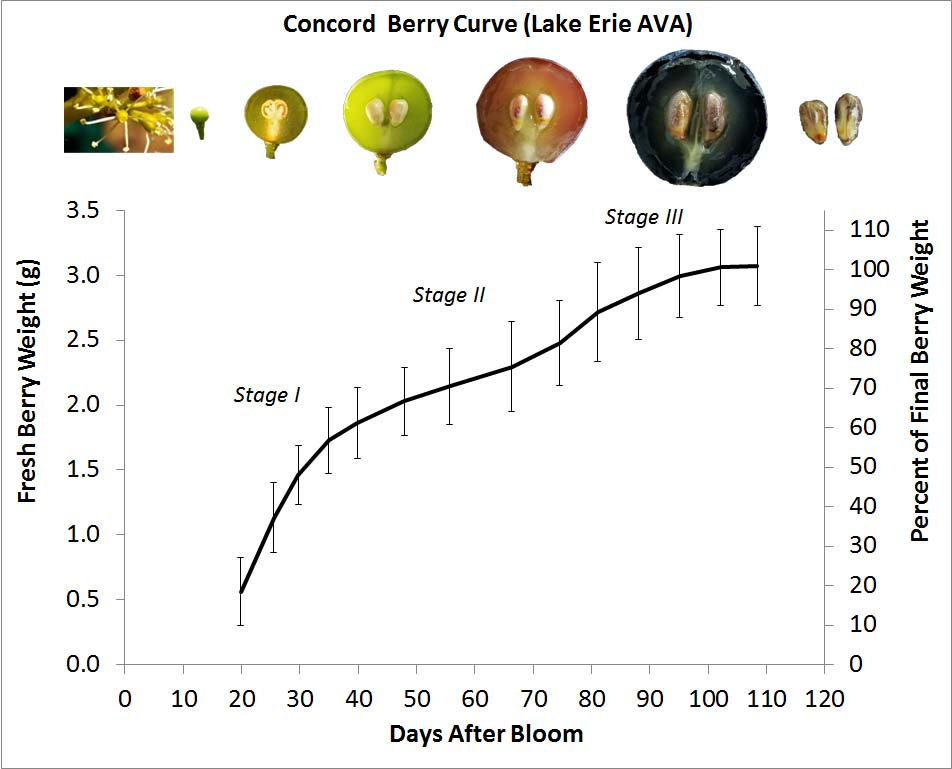 Concord-berry-curve_Lake-Erie.jpg