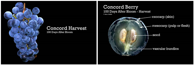harvest-berry-photos.png