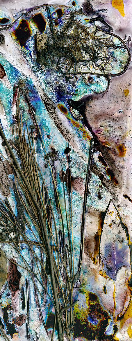 Aqua Understory by Renata Buziak