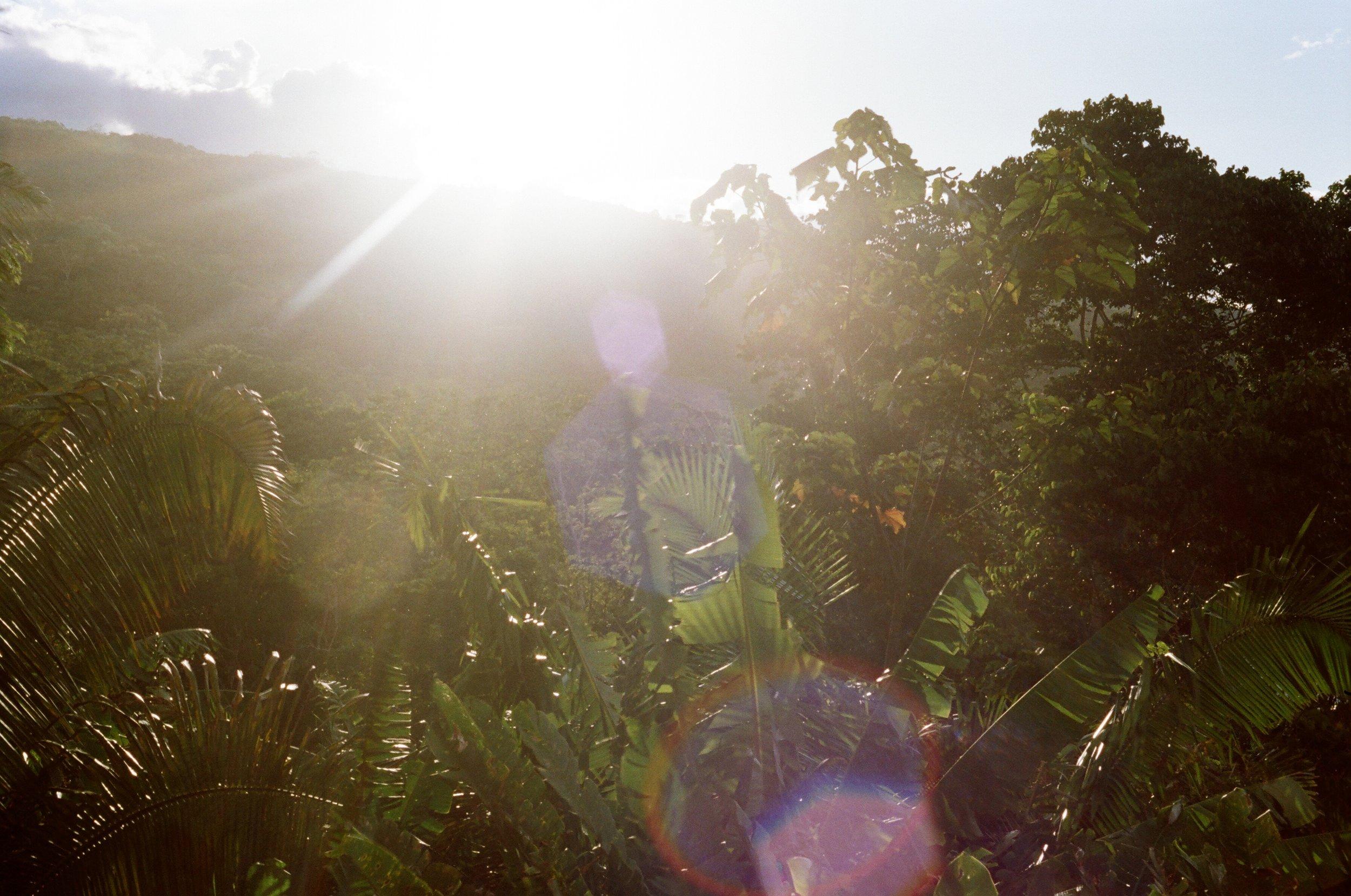 Retrouver un équilibre de vie par le yoga et des conseils liés aux plantes - EN entreprise