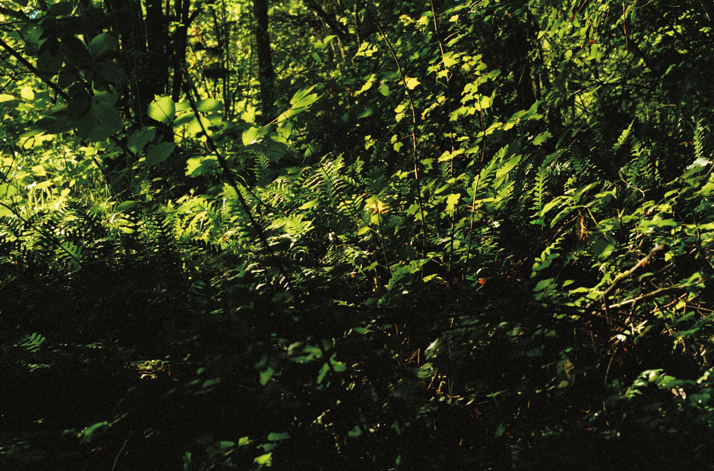 Bain de forêt : savourer le silence, se recharger en marchant entouré des arbres. - Bois de vincennes