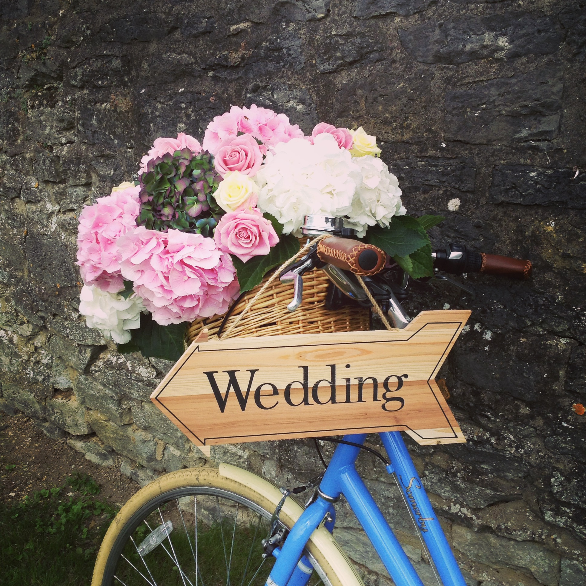 Hydrangea Bike Manor Farm Barn.JPG
