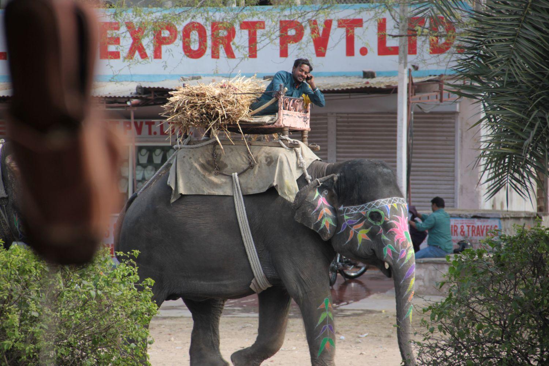Jaipur | Rajasthan | Elephant Mahout export | ©sandrine cohen