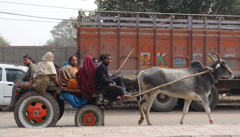 Old Delhi | animal drawn cart in trafic | ©sandrine cohen