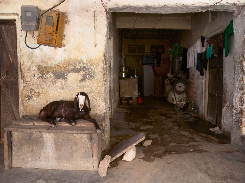Jaipur | Pink city | Rajasthan | Coat sitting on a bench | ©sandrine cohen
