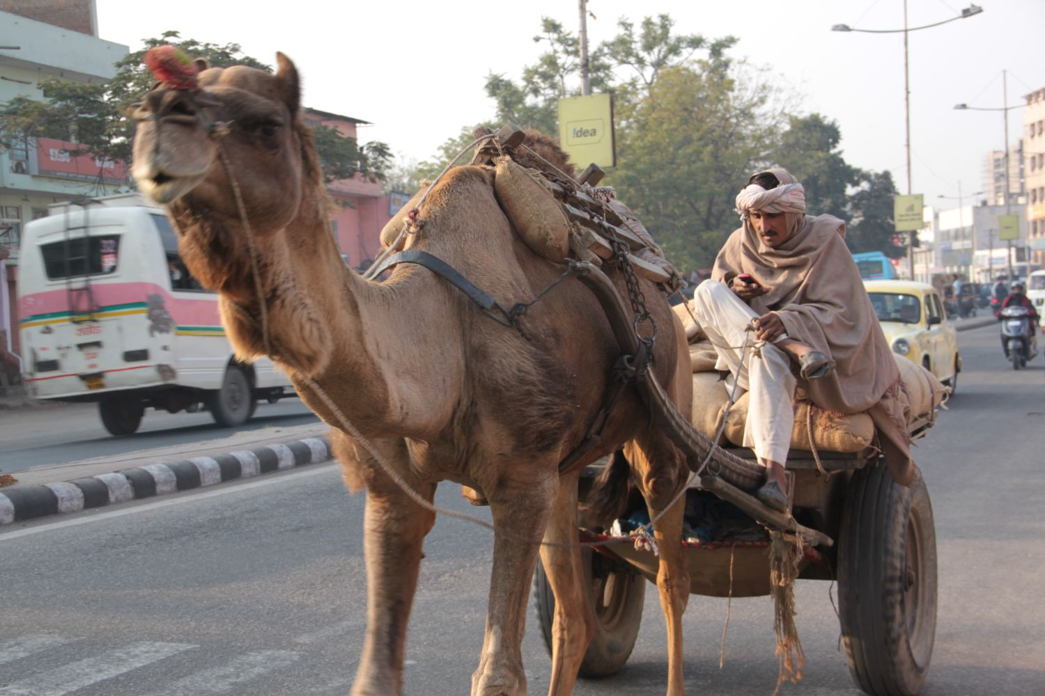 Jaipur | Pink city | Rajasthan | Indian man on his camel calling with mobile | ©sandrine cohen