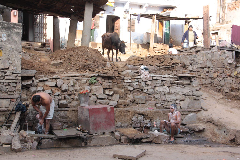 Jaipur | Pink city | Rajasthan | Indian man washing him | Indian cow  | ©sandrine cohen