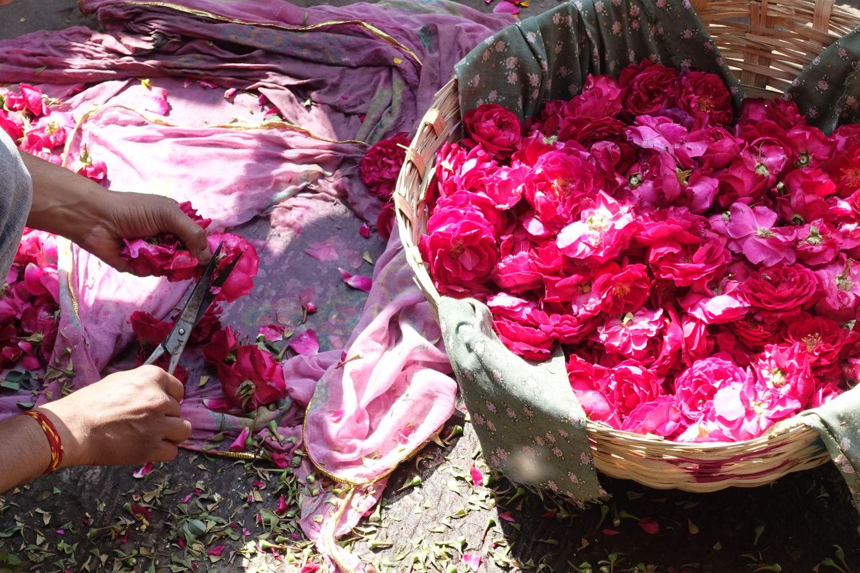 Jaipur | Pink city | Rajasthan | Rose petals | ©sandrine cohen