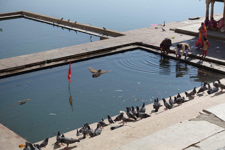 Pushkar | Rajasthan | Pushkar lake | Pigeons | ©sandrine cohen