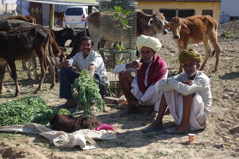 Pushkar | Rajasthan | Rajputs with animals | ©sandrine cohen