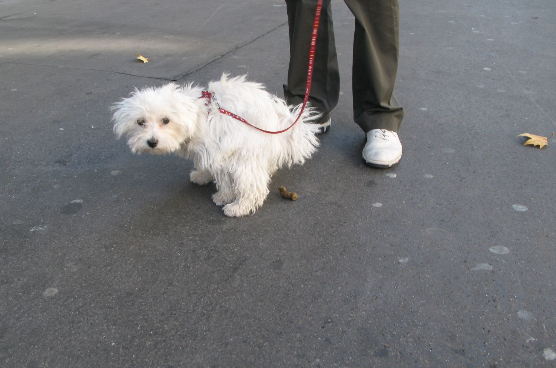 Chien à l'aise sur un trottoir de Paris   photo sandrine cohen
