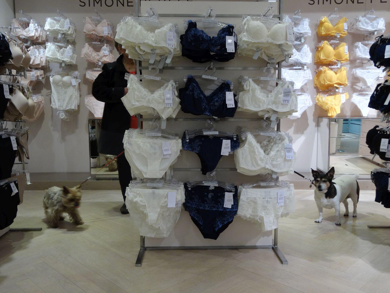 Chiens au rayon lingerie   Le Bon Marché   Paris   photo sandrine cohen