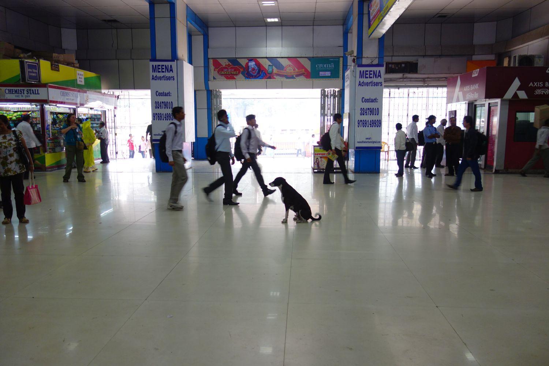 Dog at Churchgate station   Mumbai Bombay   India   photo sandrine cohen
