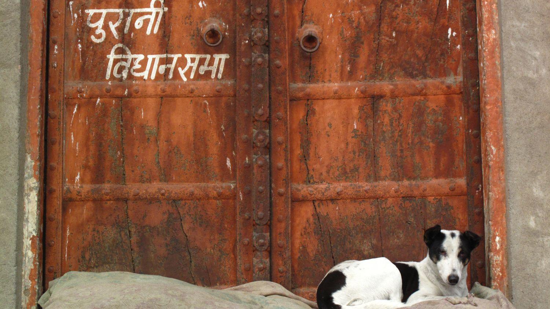Dog in front of the door   Jaipur   India   photo sandrine cohen