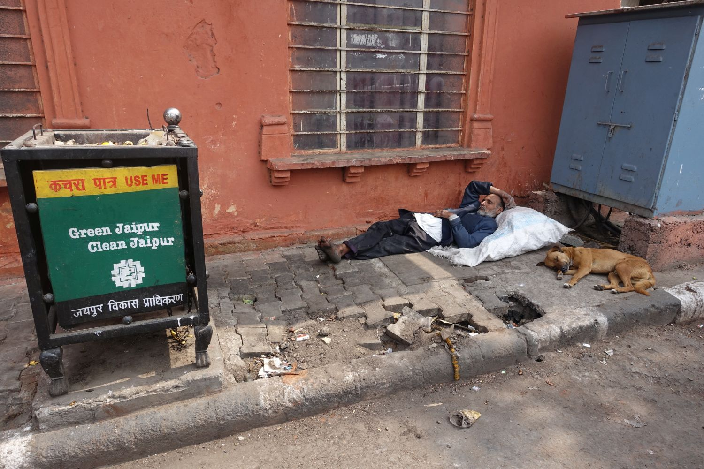 Dog sleeping at Green Jaipur   Jaipur   Rajasthan   India   photo sandrine cohen