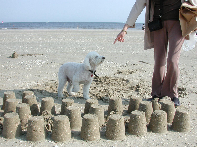 Chien caniche et pâtés de sable sur la plage   Poodle and sand patches on the beach   La Baule   photo sandrine cohen