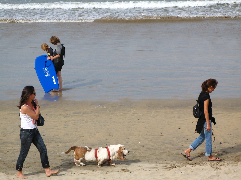Chien Basset sur la plage   photo sandrine cohen