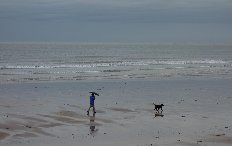 Chien sur la plage et sous la pluie   photo sandrine cohen