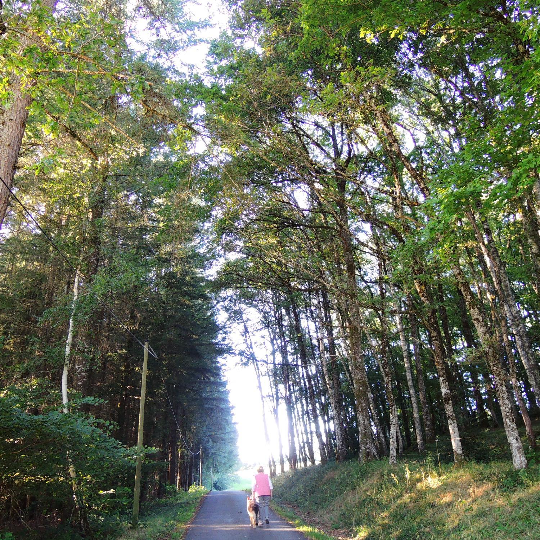 Promenade du chien sous les bois   Corrèze   France   photo sandrine cohen