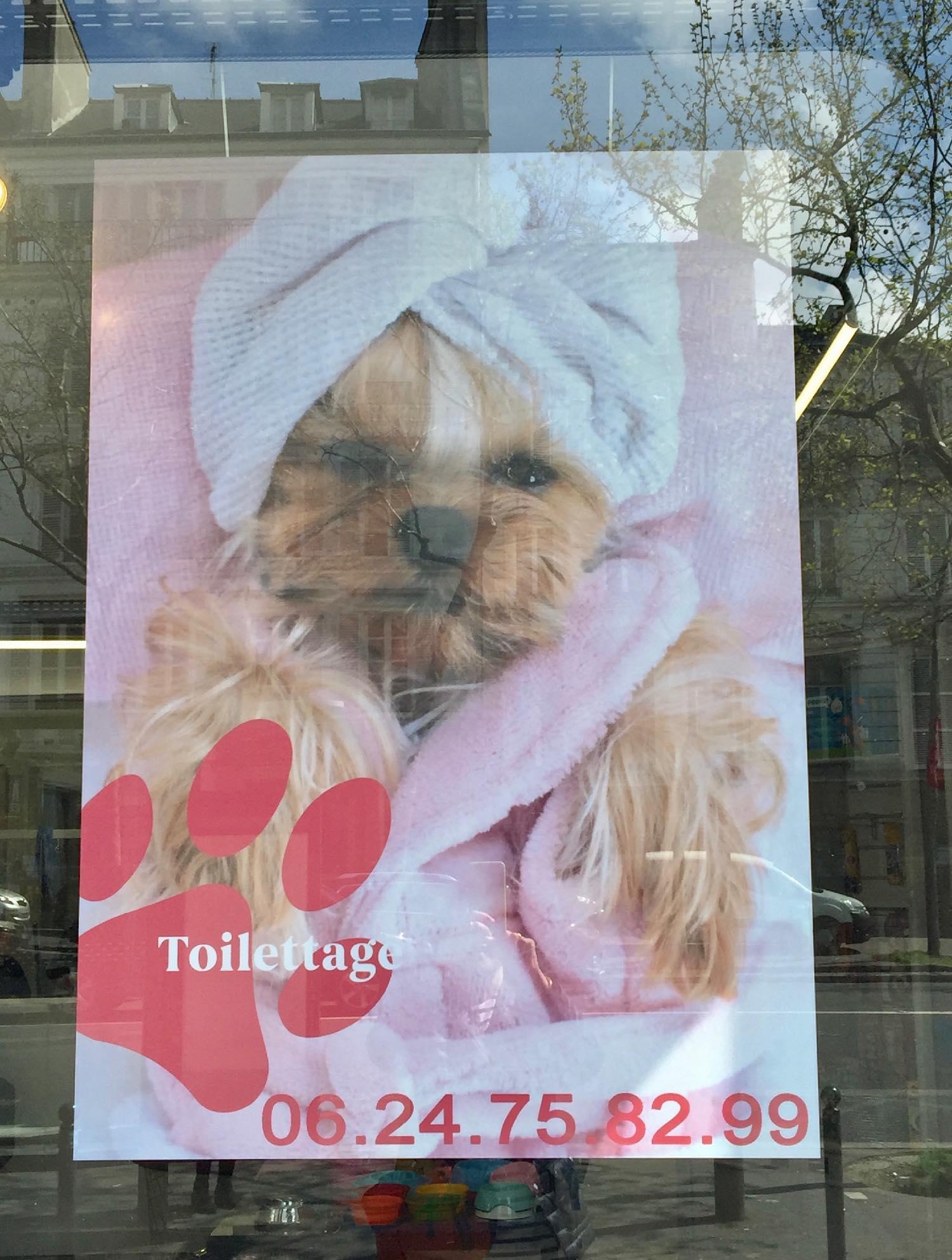 Institut de beauté pour chiens   Paris   photo sandrine cohen