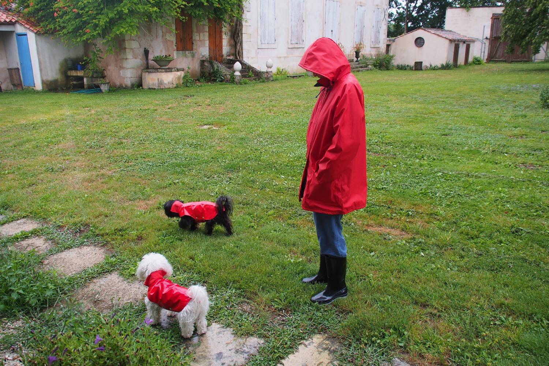 Chiens et maitresse en cirée rouge   Charente Maritime   France   photo sandrine cohen