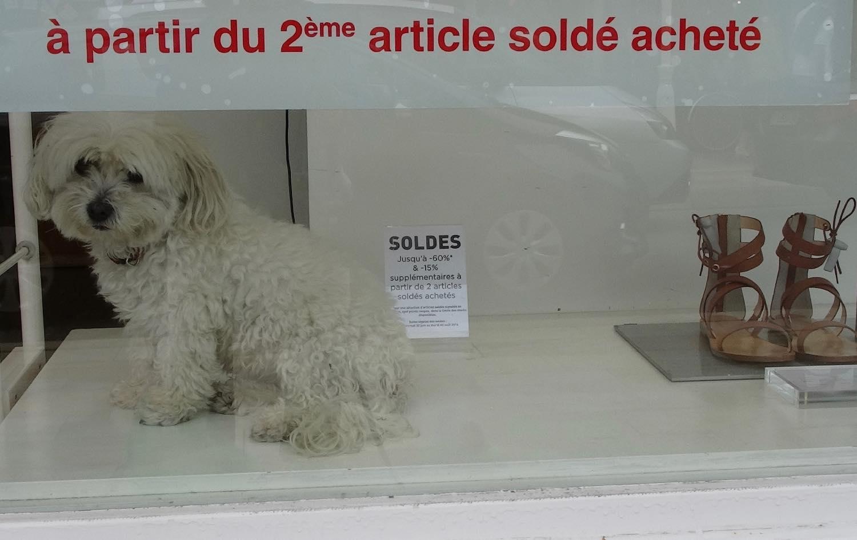 Chien soldé dans la vitrine   dog sold in showcase   La Baule   France   photo sandrine cohen