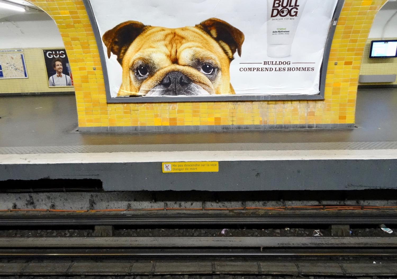 Publicité avec Bouledogue dans le métro   Paris   photo sandrine cohen