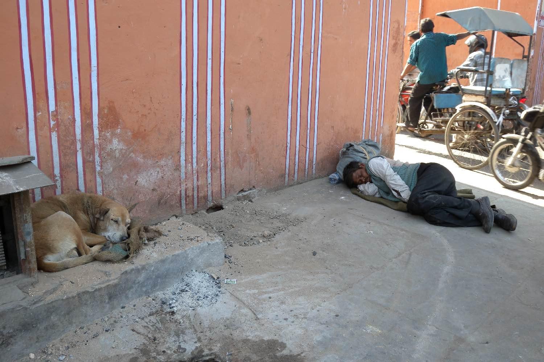 Dog at Jaipur   Jaipur   Time to sleep   photo sandrine cohen
