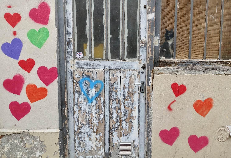 chat coeur 11e.jpg