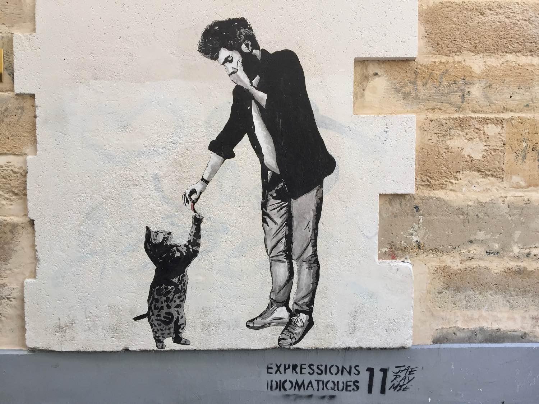 chat homme 2e.jpg