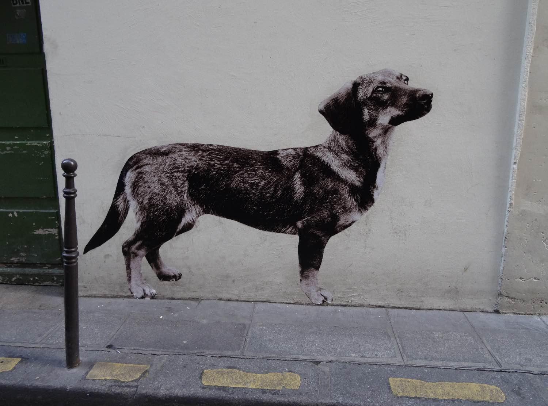 chien basset 4e.jpg