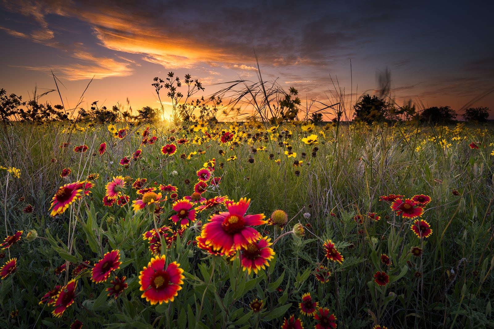 WildflowerSunset.jpg