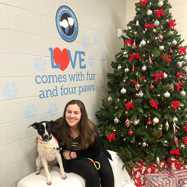 Patti has been a resident of CAA since July. Today she is officially going home for the holidays!!! Sending special Christmas wishes to all pet adopters - you are our heroes 🐶🎄#caapets #adopt