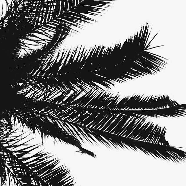 Palm trees & the ocean breeze✨🌴