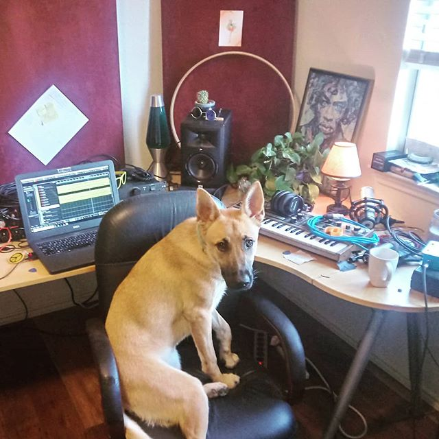 She says I need woofers or I'll never truly understand what is happening in the low end of my mix.  #crm #collinrussellmullins #homestudio #recording #helper #engineer #producer #dogdad #focusrite #jbl #shure #warmaudio #houseplants #unityelectric #cubase