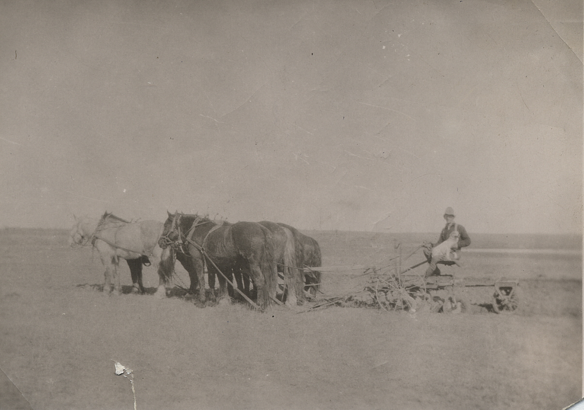 Early Farming 1917 horse drawn plow   Courtesy the Galt Museum & Archives: 19641073000 p 65