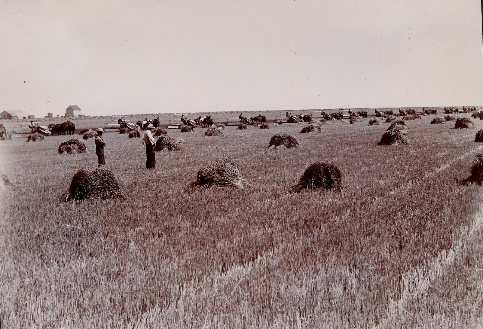 Early farming 1910 threshing near Lethbridge   Courtesy the Galt Museum & Archives: 19740030000-025 p 65