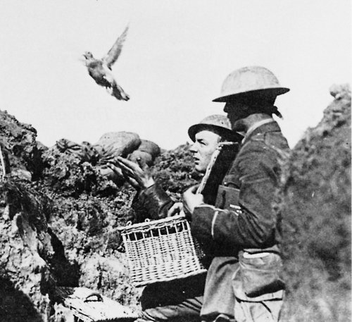 Releasing a carrier pigeon.