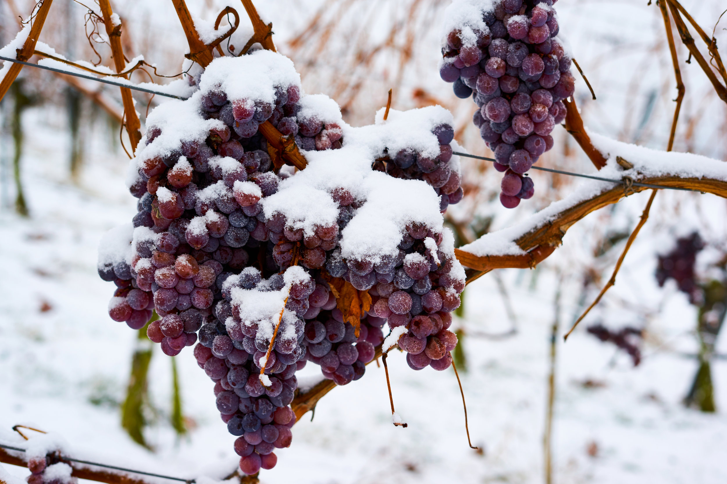 French-Valley-Iced-Wine.jpg
