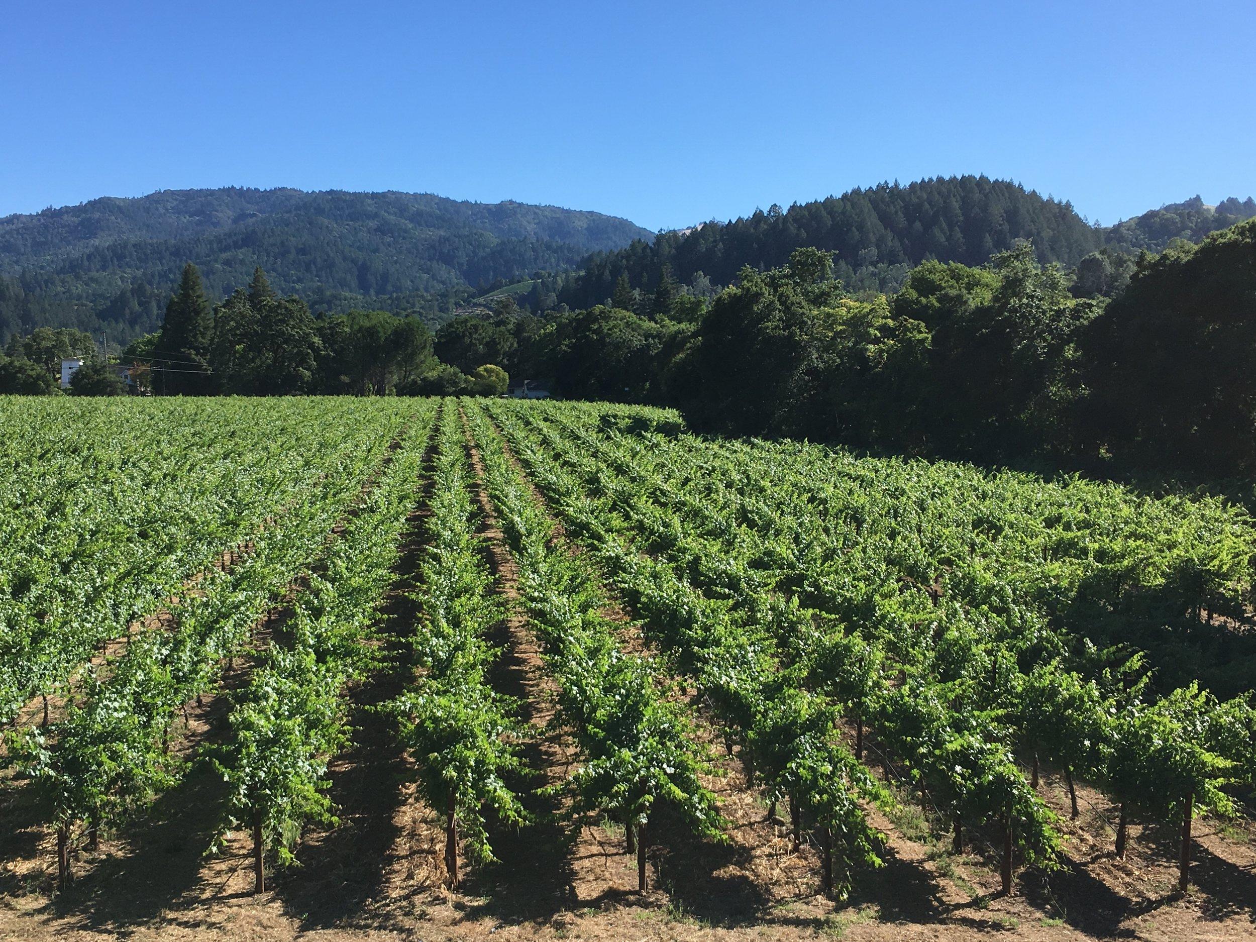 Pristine Napa Valley Vineyards