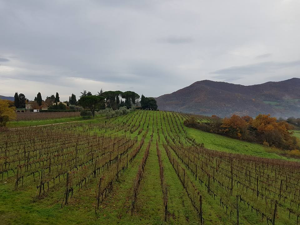 Frascole Vineyards in Tuscany