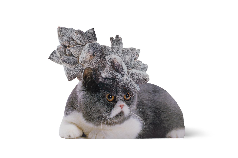 SE-Cats&PlantsStandup-2.jpg