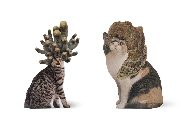 SE-Cats&PlantsStandup-3.jpg