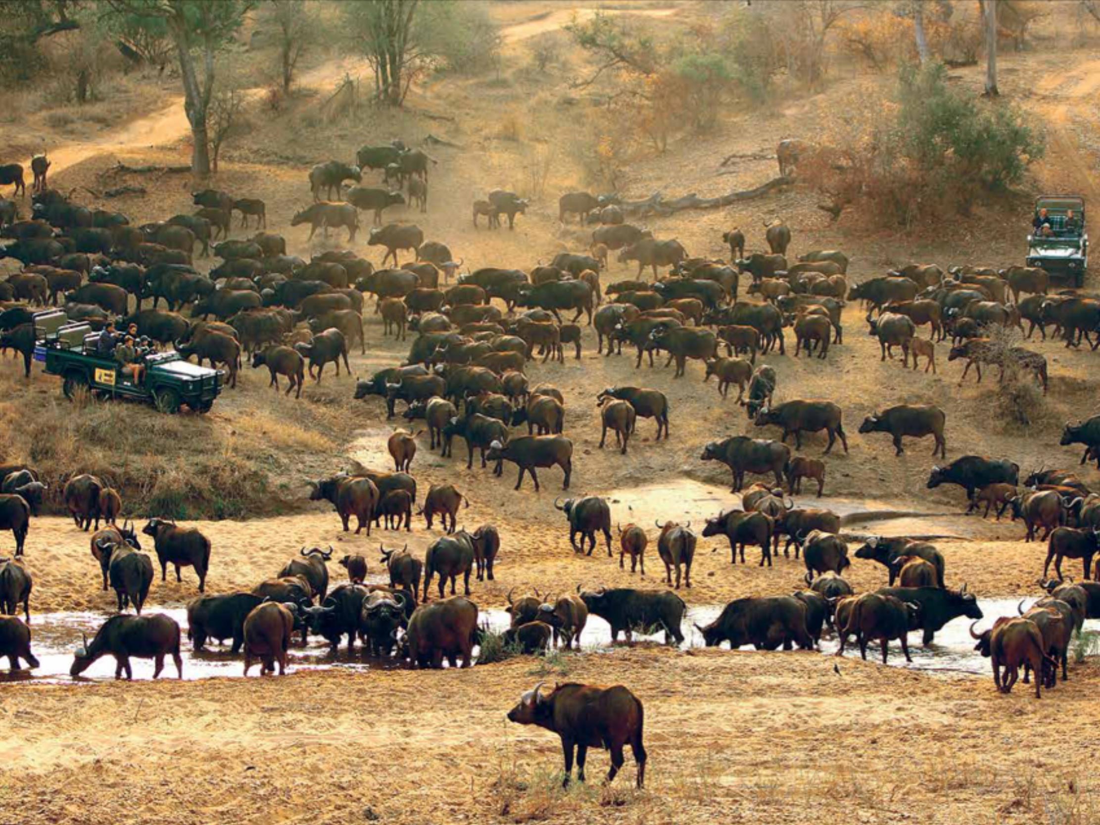 Safari.png