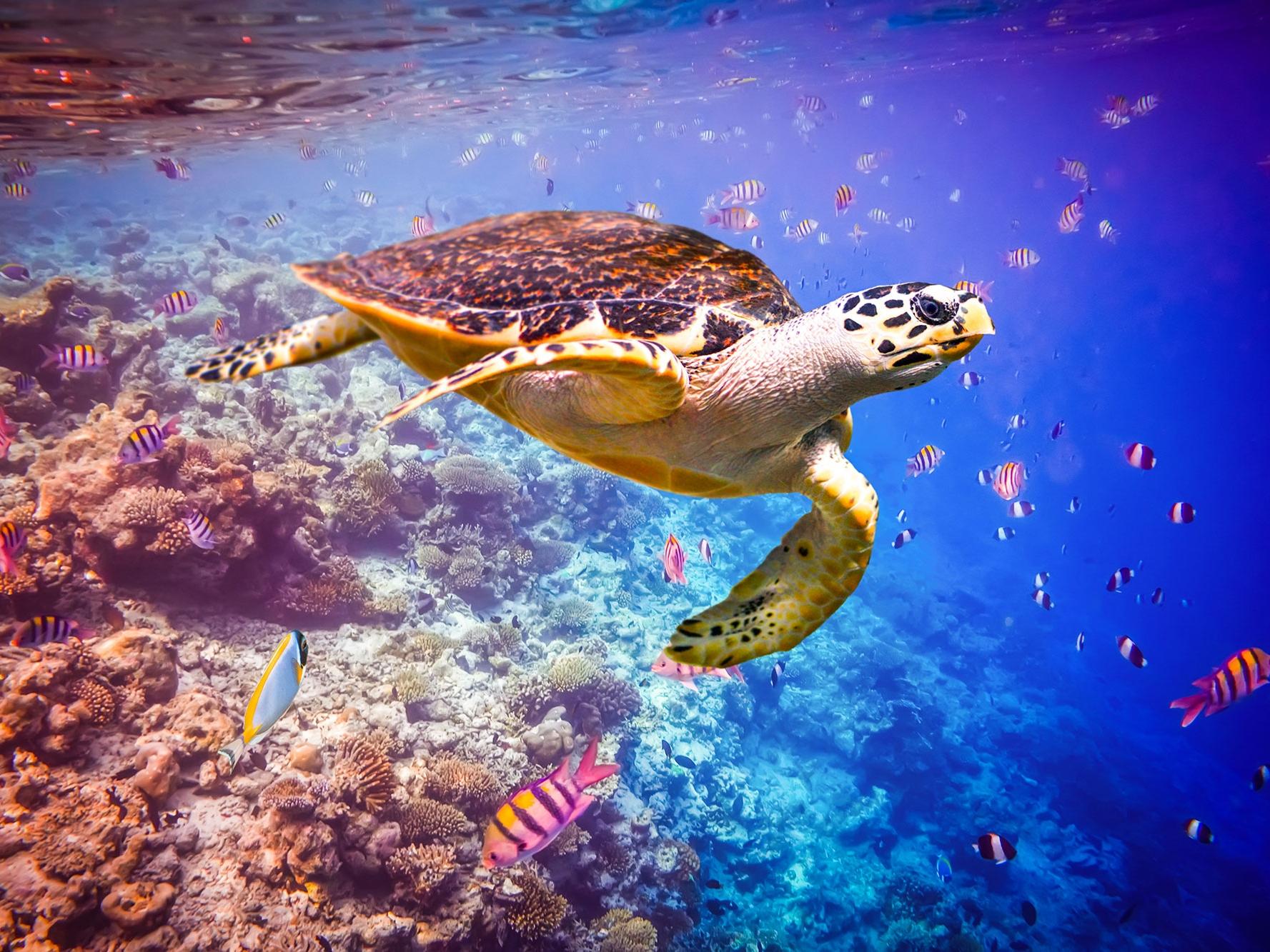 Diving-_turtle.jpg