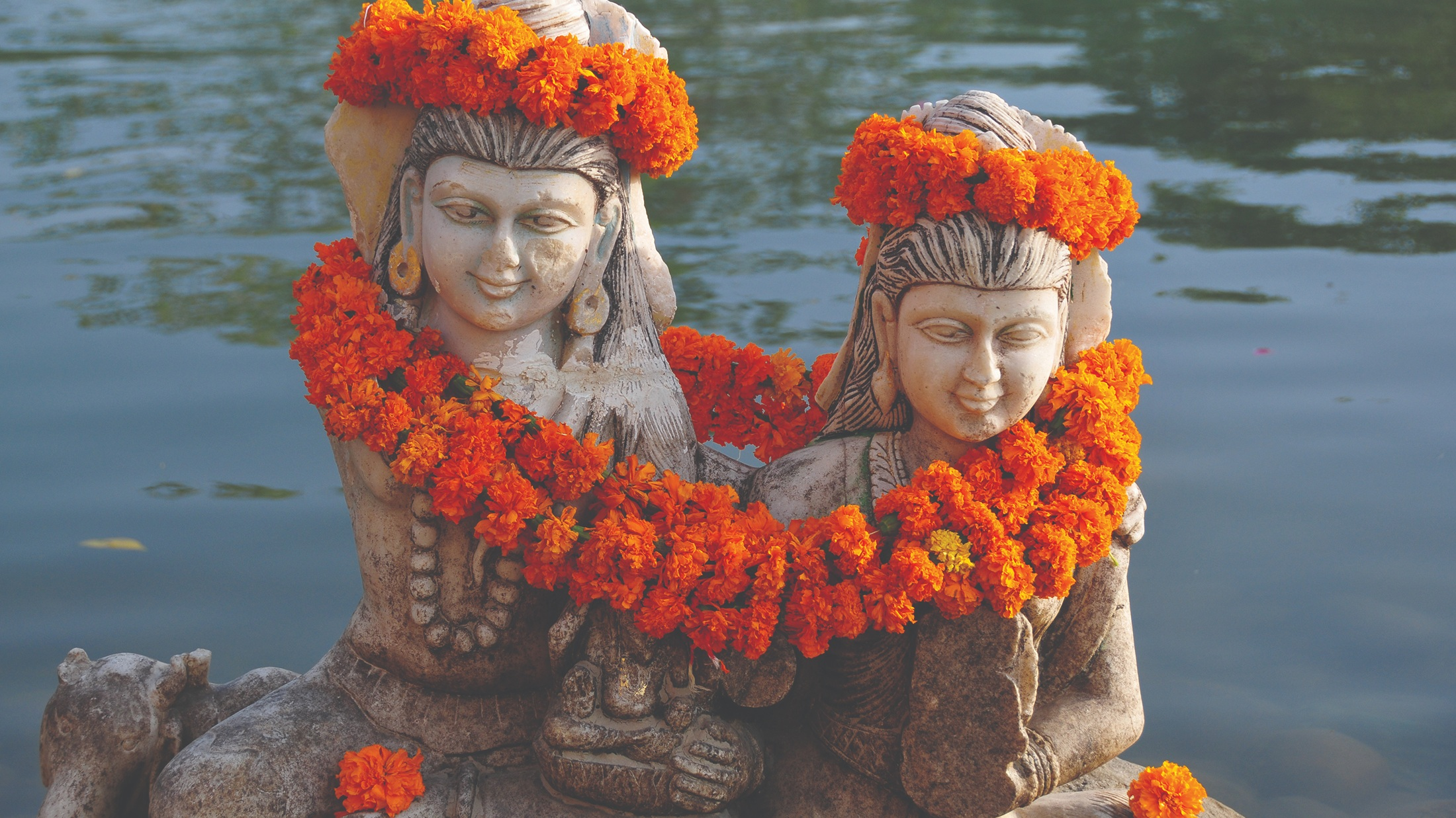 THE BEST EXOTIC MARIGOLD TOUR INDIA -