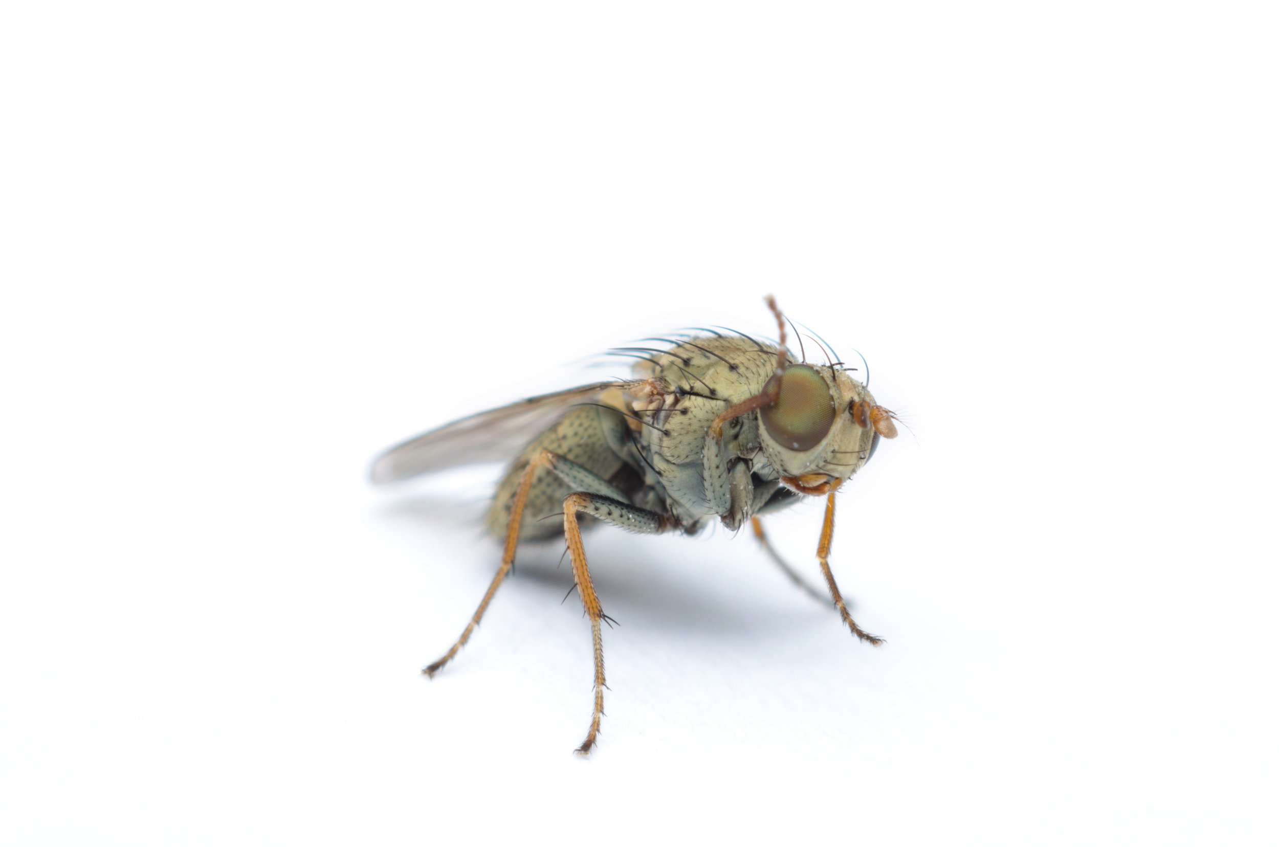 One example of the risk - only a couple millimeters in length and much smaller than your common house fly, certain fruit flies' eggs and larvae can easily hide unseen inside fruits and vegetables.