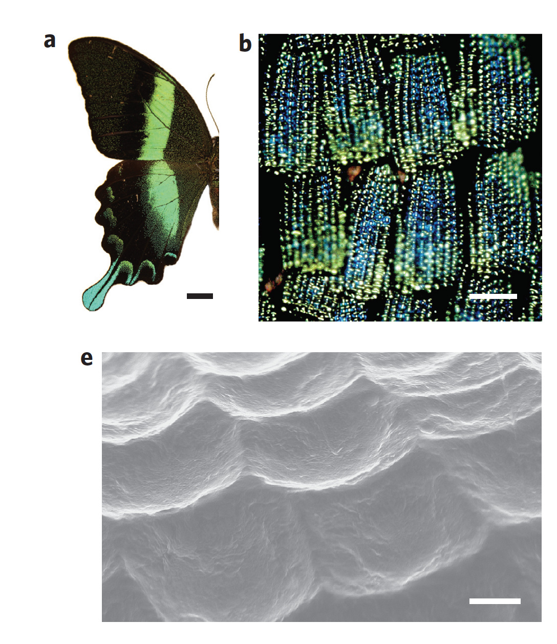 """2. Volsun, Linden. """"Butterfly Wings Idea Boosts Hydrogen Production."""" Butterfly Wings Idea Boosts Hydrogen Production 